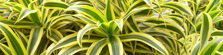 plante depolluante
